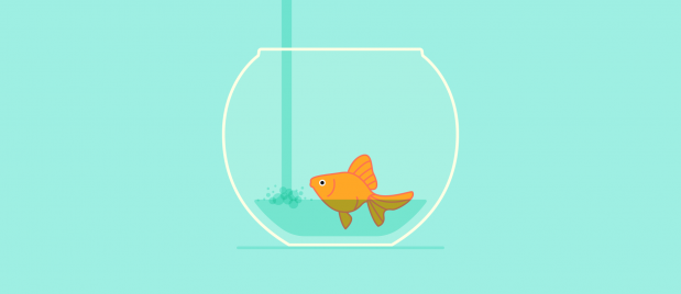 a fish in a fish bowl